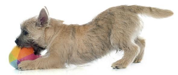 Cours obligatoires pour les propriétaires de chien – Cours théoriques obligatoires - Cours pratiques obligatoires - Programme des cours obligatoires - Éducateurs canins diplômés / accrédités - Canton de Vaud