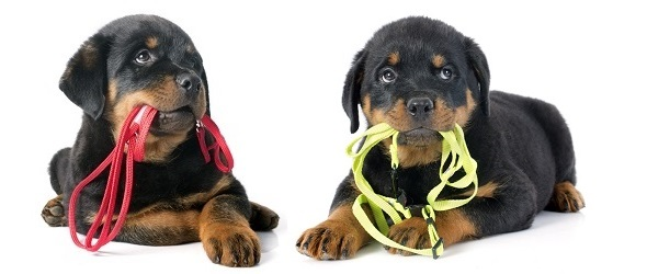 Cours pratiques - Cours pratiques obligatoires pour les nouveaux chiens - Cours obligatoires pour les propriétaires de chien - Programme des cours pratiques