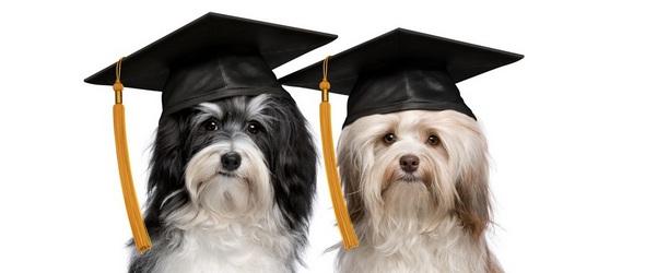 Cours théoriques - Cours théoriques obligatoires pour les propriétaires d'un premier chien - Programme des cours théoriques