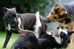 stages-socialisation-chien-chiot Jouer avec le chiot pour le socialiser en douceur