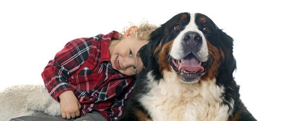 Cours privés pour les propriétaires de chien