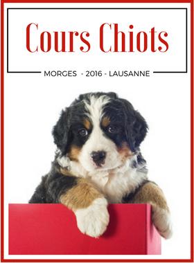 Cours obligatoires - Cours obligatoires propriétaires de chien