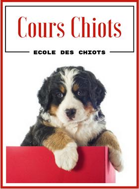 Cours Chiots Education Canine Vaud - Ecole des chiots - Morges / Lausanne