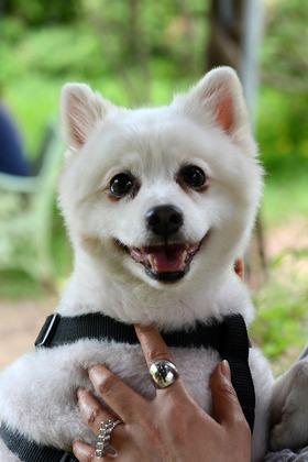 Cours théoriques - Education Canine - Ecole Des Chiots - Cours-Chiot - Classe Chiots - Education chiot