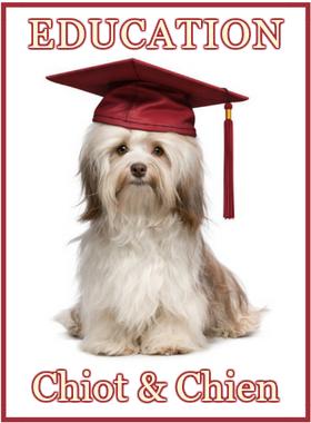 cours privés d'éducation canine des chiots, jeunes chiens ou chiens adultes