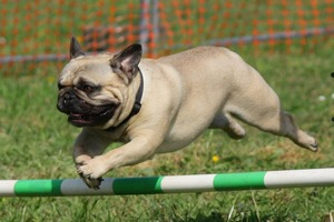 stages de socialisation active - chien et chiot