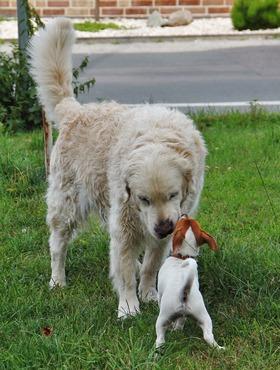 Education Canine - Socialisation - Ecole Des Chiots - Cours-Chiot - Classe Chiots - Education chiot