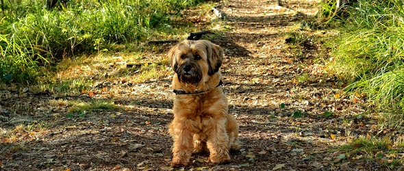 Tiques chiens Vaud Lausanne Morges Montreux Protection Vaccin