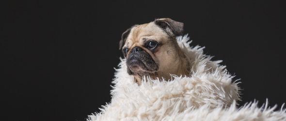 La responsabilité civile du détenteur de chien - Quelle est l'étendue de la responsabilité du détenteur ou propriétaire d'un chien