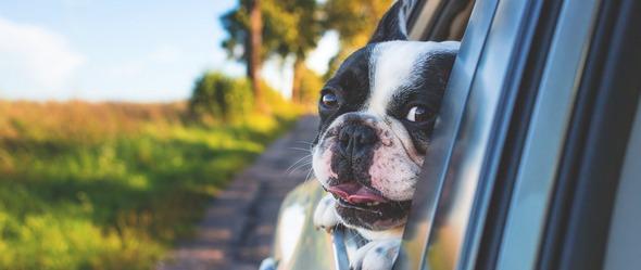 Voyage en voiture avec votre chien