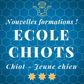Ecole des chiots - Chiot - Jeune chien - Cours Chiots - Education Canine Vaud - Programme des cours pour chiots - Nyon / Morges / Lausanne / Montreux