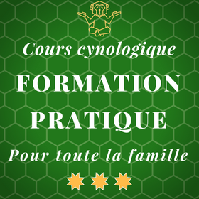 Cours pratique de formation cynologique - Programme des cours pour chiots - Nyon / Morges / Lausanne / Montreux