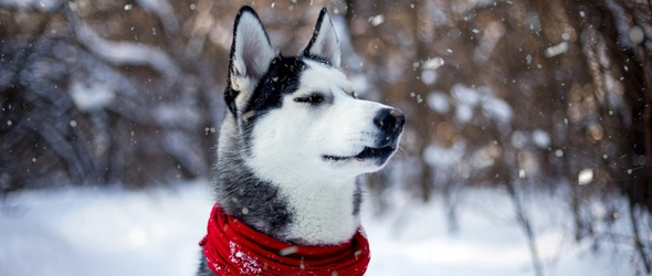 Education canine dans le canton de Vaud - Cours obligatoires pour les propriétaires de chien - Cours chiots - Programme des cours d'éducation canine région Lausanne / Morges