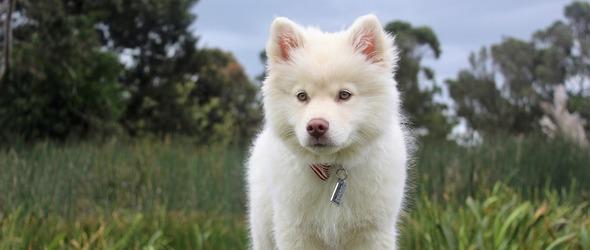 Education canine dans le canton de Vaud - Cours obligatoires pour les propriétaires de chien - Programme des cours d'éducation canine région Lausanne / Morges