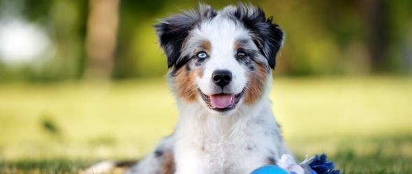 Education canine - Programme du cours théorique de formation T4 - Cours obligatoires pour les propriétaires de chien - Programme des cours d'éducation canine région Lausanne / Morges