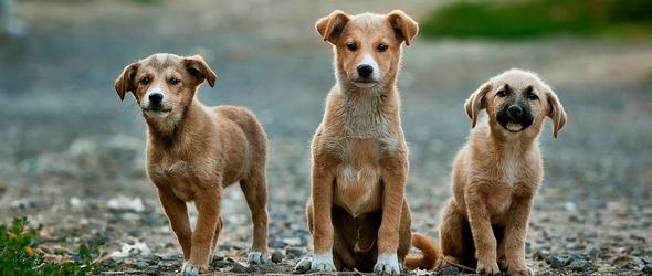Cours pratiques de formation cynologique - Education Canine Vaud -