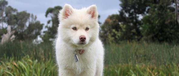 Education canine et cours chiots dans le canton de Vaud - Cours obligatoires pour les propriétaires de chien - Cours chiots - Programme des cours d'éducation canine région Lausanne / Morges