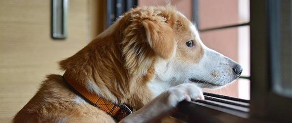 Education Canine Vaud - 2021 - Cours obligatoires pour les chiots et les chiens - Programme des cours pour chiots et chiens d'éducation canine région Nyon / Morges / Lausanne / Montreux