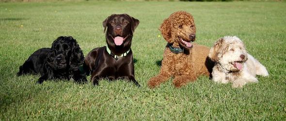 Nos cours d'éducation canine sont ouverts à tous, adultes, enfants et familles