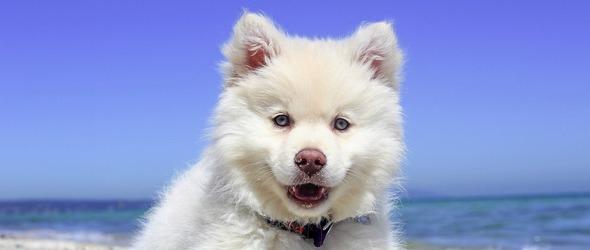 Tarif des cours - Tarif Cours chiots - tarif cours éducation canine - Tarif Stages de Socialisation Chiens