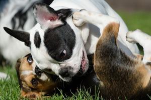 tages de socialisation pour chien et chiot
