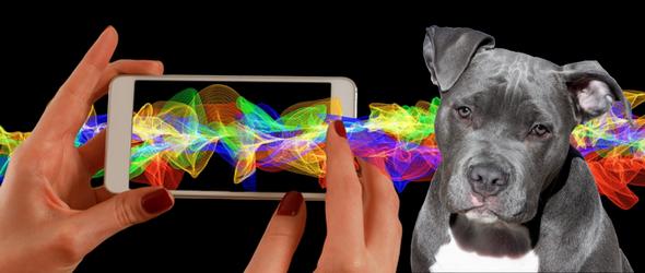 Applications utiles pour votre chien - applications pour chien compatibles en suisse pour smartphone et tablette iOS & Androïde