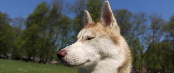L'éducation canine des chiots et des chiens est indispensable pour le maître et l'animal afin de créer un lien social et hiérarchique équilibré.