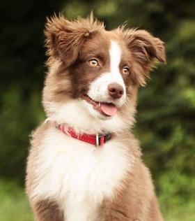 Classe Chiots - Education chiot - Education Canine Vaud - Cours pratiques - Programme des cours pour chiots et chiens d'éducation canine / Nyon / Morges / Lausanne / Montreux