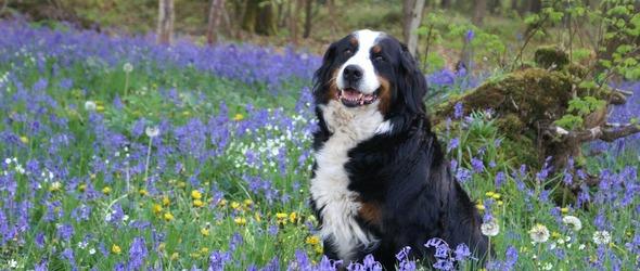 Education canine - Programme du cours théorique de formation cynologique T2 - Cours obligatoires pour les propriétaires de chien - Programme des cours d'éducation canine