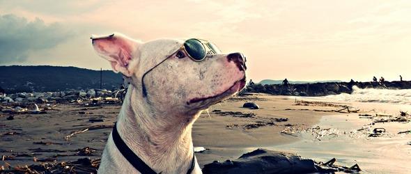 Voyager avec son chien - Conseils pour préparer le voyage de son chien