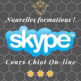 Formation on-line Skype - Cours éducation canine pour chiot et jeune chien