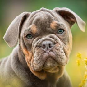 Education Canine Vaud - Cours pratiques - Programme des cours pour chiots et chiens d'éducation canine / Nyon / Morges / Lausanne / Montreux
