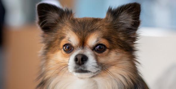 Cours privés d'éducation canine pour chiots et chiens - 2021